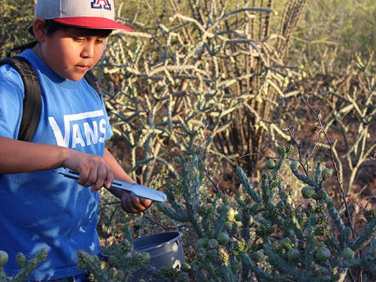 Historical crops in Arizona may be key to future of sustainable agriculture
