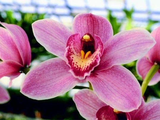 -TLHBrd_08-07-2013_Democrat_1_B002~~2013~08~06~IMG_orchid_3.jpg_1_1_4P4P1LVE.jpg