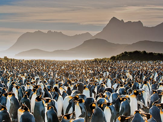 Frans Lanting, King Colony, Antarctica, from the National Geographic exhibition Rarely Seen