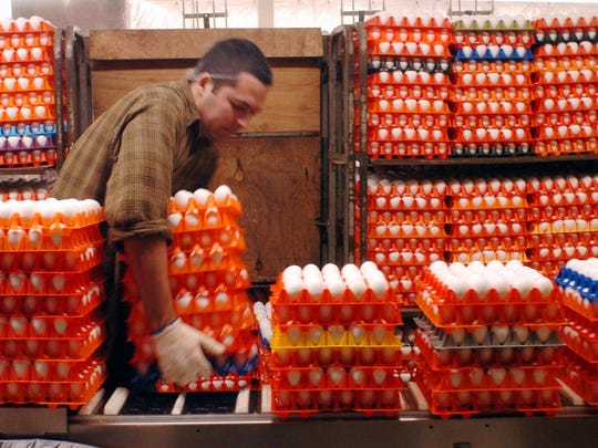 Serguei Diaz loads racks of eggs for washing and cleaning at Sauder's Eggs processing and packaging plant in Lititz, Pa.