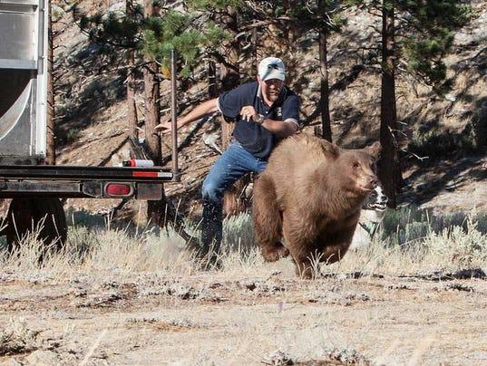 636292718935362803--3-Ranchos-Bear-Bear9Aug13aWeb.jpg
