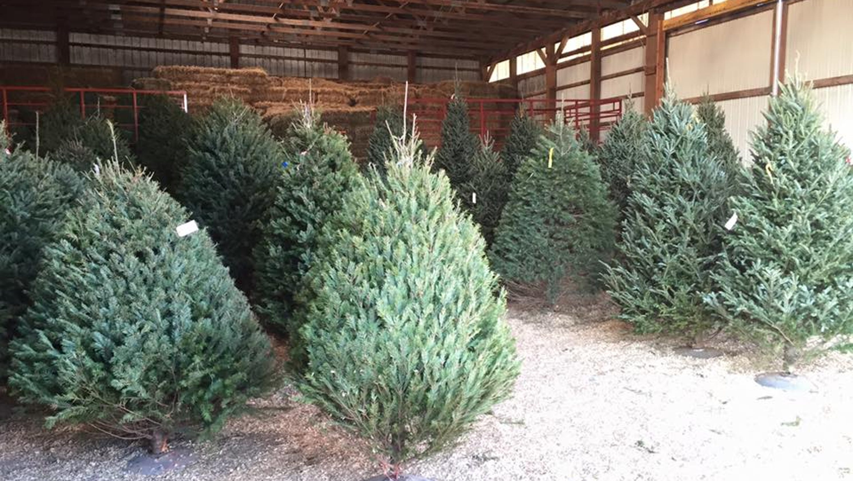 Travel: Where To Find Local And Live Christmas Trees