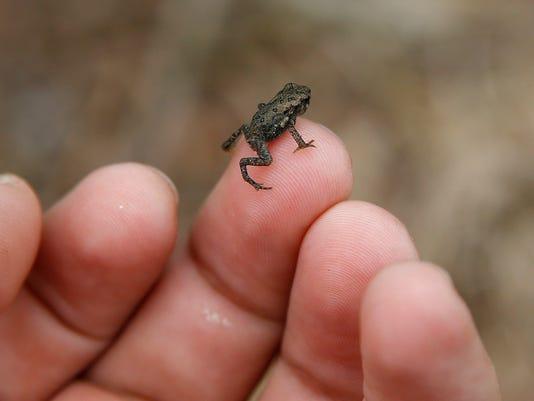 AP Toad Crossing