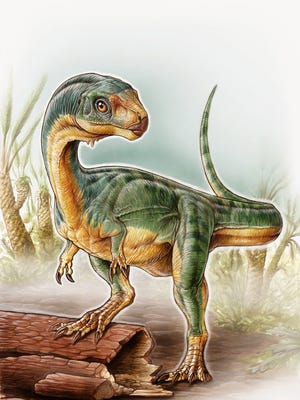 This Chilesaurus diegosuarezi, cousin of T. rex, is named for the 7-year-old boy who discovered it.