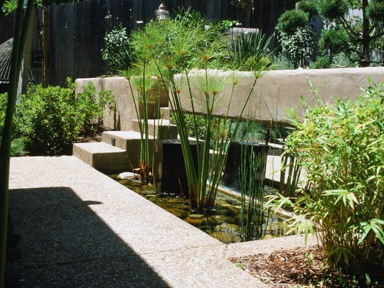 Natural water gardens are the perfect place for papyrus
