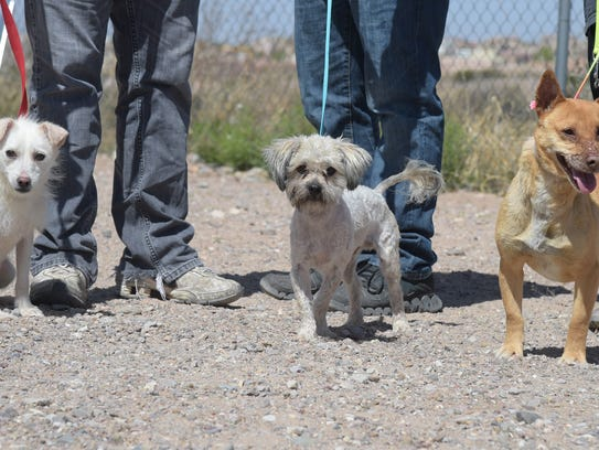These dogs at the Animal Service Center of the Mesilla