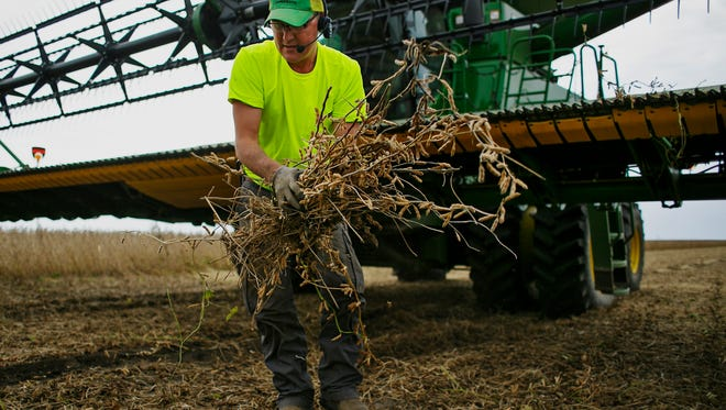 Steve Anderson clears beans from his combine's header while harvesting in Beaman on Thursday, September 24, 2015.