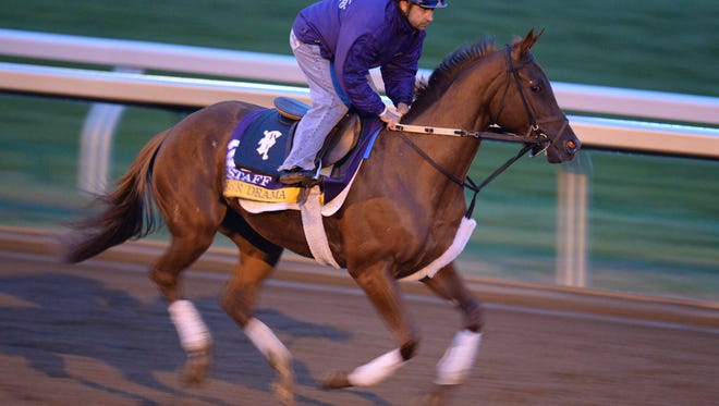 Sheer Drama runs during the morning Breeder's Cup training at Keeneland in Lexington, Ky., on Monday, October 26, 2015. Photo by Mike Weaver
