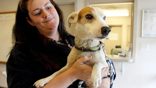 Candy Bigler, of the Marion Area Humane Society, holds a flea-infested Jack Russell terrier that was confiscated Tuesday from a Somerlot-Hoffman Road residence along with 50 other animals.
