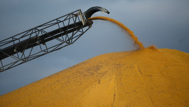 This year's bumper crop has quickly filled grain elevators around the state. Officials at West Central Cooperative say they had to put soybeans on the ground for the first time ever so farmers didn't have to stop their harvest. Their facility in Adair continues to have grain come in as it nears capacity on Wednesday, Nov. 04, 2015.