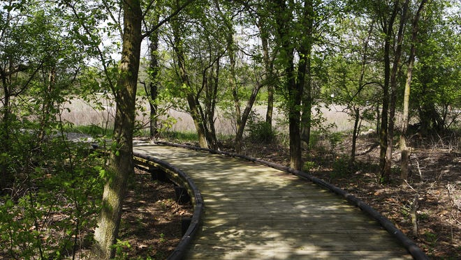 A  boardwalk enters the Craddock Wetland Nature Preserve.