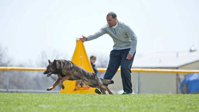 Joe Brockington started his business, IBSO K9, LLC, in 2008. IBSO K9 produces, raises, trains, and maintains Working German Shepherds, utilizing each dog's strengths. In this photo, Brockington is competing with/handling his dog Yogy at the Working Dog Championship.