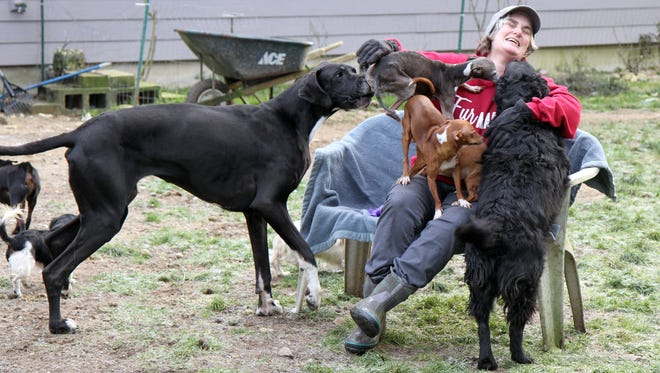 Victoria Carnahan has 80 dogs on her property near Belfair, and some of her neighbors have complained about noise. But no Mason County law limits how many dogs a resident may have, and the county animal control officer says Carnahan's pets appear to be well cared for.