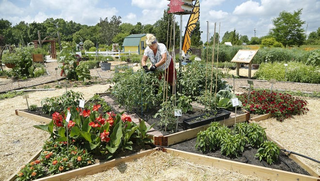 The demonstration garden of the Master Gardeners Association of Tippecanoe County is at 3150 Sagamore Parkway South in Lafayette. The project, seen here last June, may have to be scaled back as it needs irrigation improvements, and the lack of water has affected yields, according to Karen Mitchell, an educator for Purdue Extension.