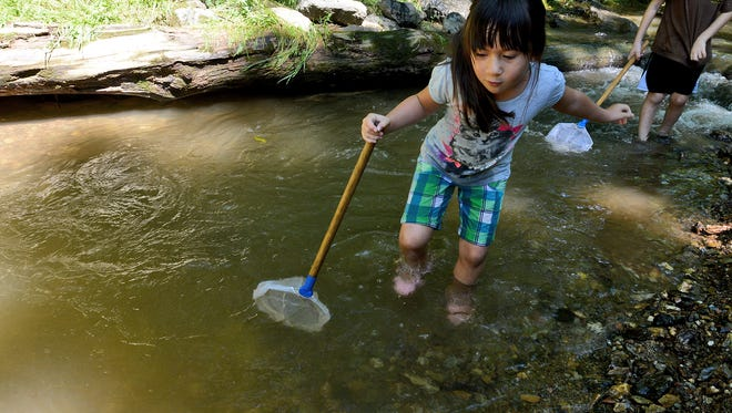 Sarafina Sariano, 6 of Hanover, wades through the water while taking part in a stream study at Richard M. Nixon County Park, Sunday, July 30, 2017.  John A. Pavoncello photo