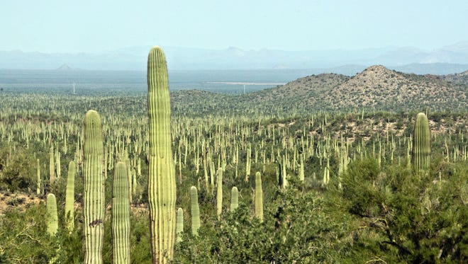 Ironwood Forest National Monument, which spans 128,917 acres northwest of Tucson, was created by President Bill Clinton in 2000.