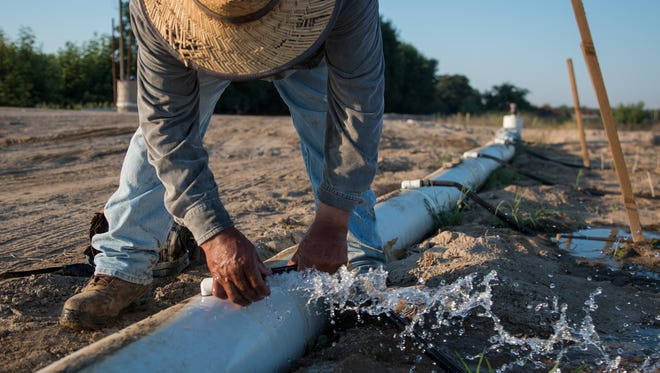 Juan Salas reconnects an irrigation line to its water source at L. E. Cooke Co. nursery in Visalia, Calif. (Jackie Wang/News21)