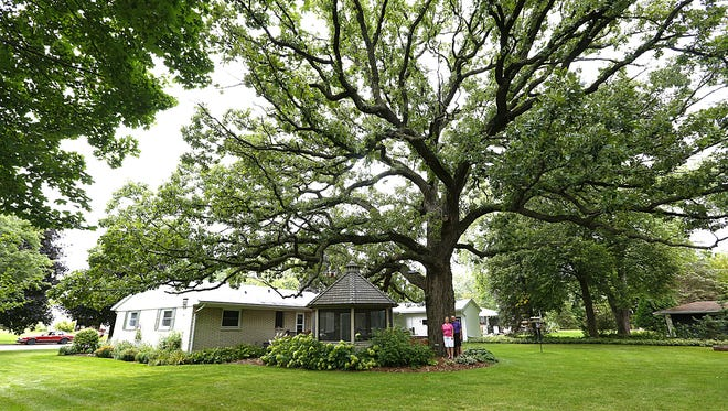 Sue and Bill Kuespert are dwarfed by a huge bur oak tree in their backyard Thursday August 17, 2017 in Fond du Lac. The tree is designated a champion tree by the Wisconsin Department of Natural Resources. Doug Raflik/USA TODAY NETWORK-Wisconsin