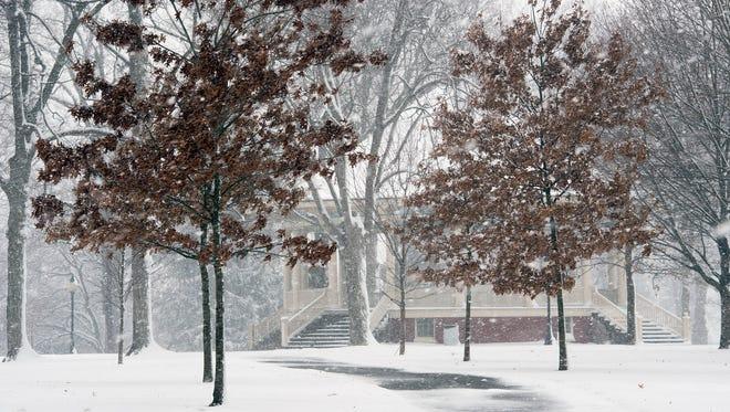 Oak trees will soon loose last years leaves in Farquhar Park in York.