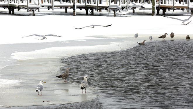 Seagulls gather near open water at the Fond du Lac Yacht Club in 2017.