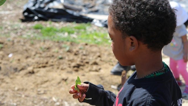 Kay'Vion Brown enjoys a freshly-picked spinach leaf from Victory Garden Initiative's urban farm in 2018. In addition to encouraging home gardens the Victory Garden Initiative runs an urban farm.