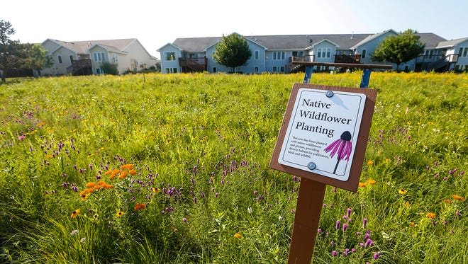 A field of prairie flowers was planted near the Camelot Drive drainage pond by Dorothy and Bob Messner, of Fond du Lac.