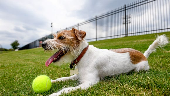 A pop-up dog park is coming to downtown Sioux Falls on Aug. 7.