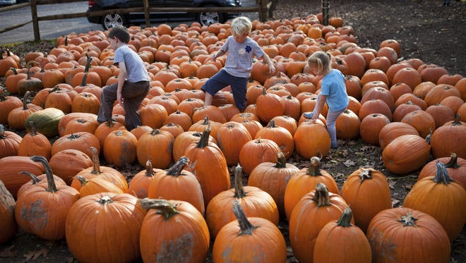 (From left) Ben Oswald, Simon Mooney, and Willa Mooney of Brighton wander through a pumpkin patch at Powers Farm Market in Pittsford on Tuesday, October 28, 2014.