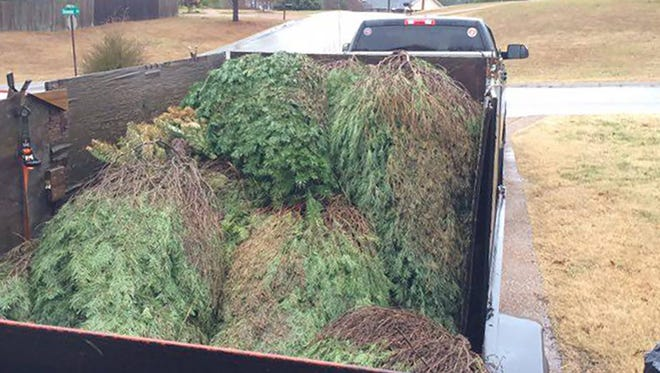 David Dodoro, of Fairview, is loading his trailer with Christmas trees in an effort to feed elephants at Hohenwald sanctuary.