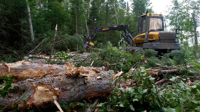 Loggers say restrictions on cutting in the Chequamegon-Nicolet National Forest are blocking the creation of jobs and harming the economy. Ecologists, though, warn past timber management has put the forest in dire circumstances.