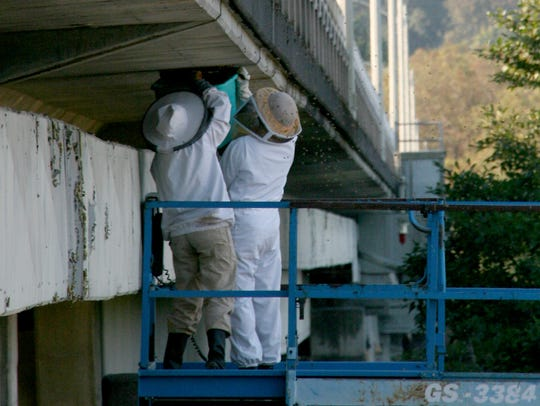 Beekeeper Kirsten Johnston (left) helps pull down the