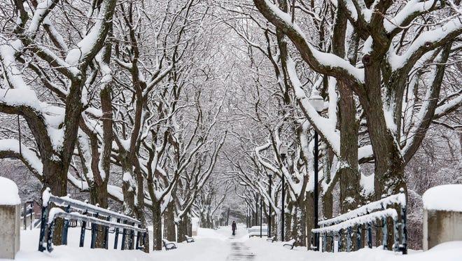 A pedestrian strolls along snow-covered trees on Battery Street in Burlington on Thursday, February 16, 2017.