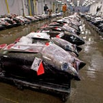 In this May 12, 2009, file photo, bigeye tuna line the floor of the United Fishing Agency's auction house in Honolulu.