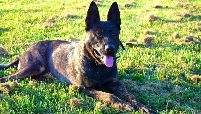 Agar, a Dutch shepherd, has begun service with the Wayne County Sheriff's Department.