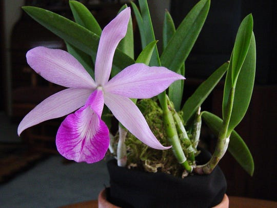 Orchid Show & Sale, Feb. 4