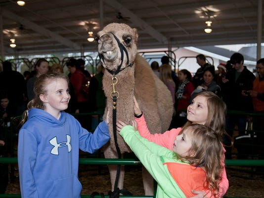 2013-12 Girls petting a camel at The Christmas Experience.jpg
