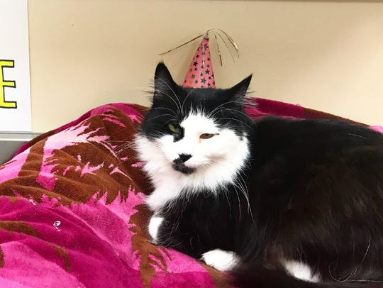 Hi! I'm Pauline, age 14. I've been at the shelter much