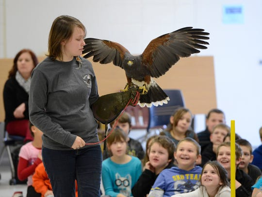 Leia Cathell, a volunteer with Raptor Rehab of Central Arkansas, shows a Harris hawk Wednesday during a program on raptors at Nelson-Wilks-Herron Elementary School.