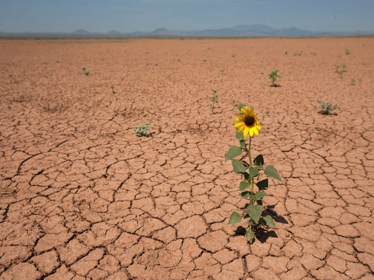 A flower grows out of a dried lakebed, called a playa, outside of Leupp, Ariz. Playas are responsible for much of the dust that gets airborne and travels northeast, settling on the snow to the Rocky Mountains in Colorado.