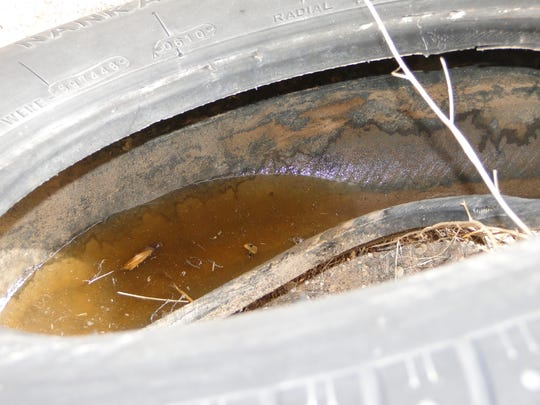 An illegally dumped tire after a rainfall provides enough still water for mosquitoes to lay eggs and develop yet another generation of potential virus-spreading vectors.