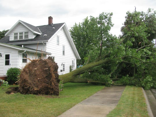 A number of stately old trees on Kewaunee's west side were uprooted in the Aug. 20 windstorm.