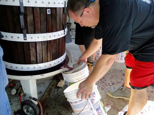 Vino Degli Amici 's Roland Priest catches fermented juice in buckets as it's separated from the grape skins.