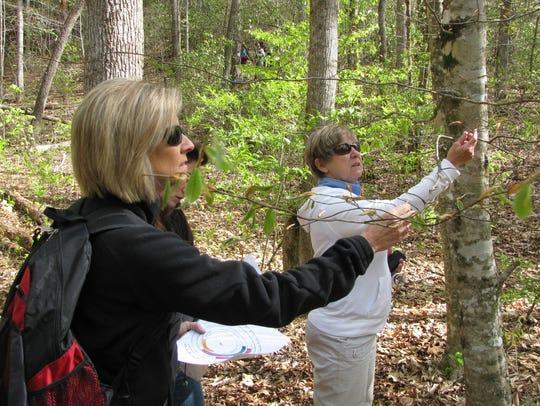 Great Smoky Mountains National park is seeking volunteers