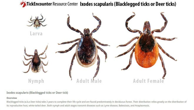 Blacklegged ticks male, female, nymph and lava, presented by the University of Rhode Island's TickEncounter Resource Center.