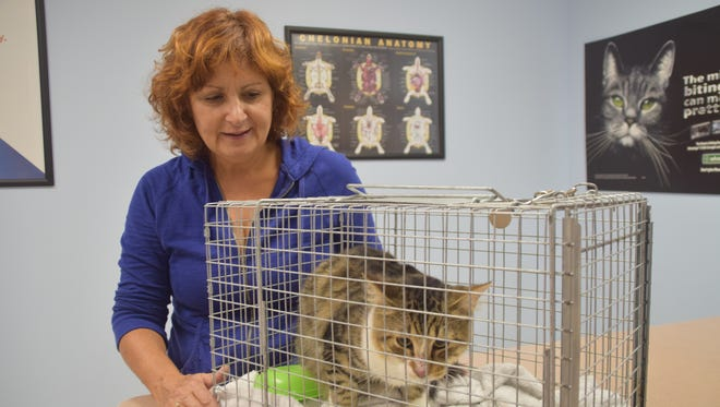 Angela Gipson tries to comfort a feral cat that was trapped so he could be neutered.