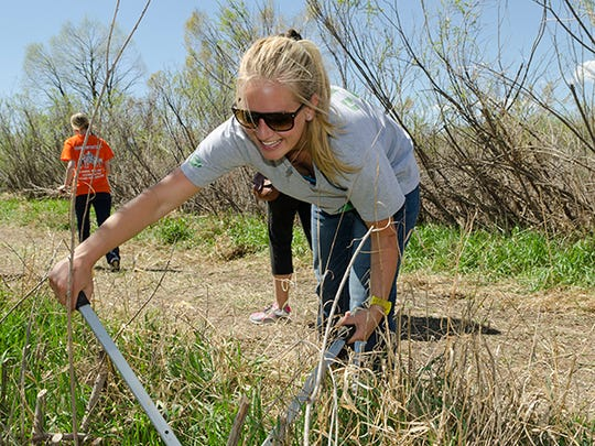 Some of the ways the day-long CSUnity event connects CSU students with the community involve volunteer activities in the outdoors, whether on city trails on in backyards of neighbors.