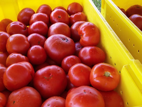 Just look at these Jersey Fresh beauties grown and harvested at the Snyder Research and Extension Farm in Pittstown. Come and taste these and other tomatoes Aug. 31 when Snyder Farm holds its annual open house and the Great Tomato Tasting.
