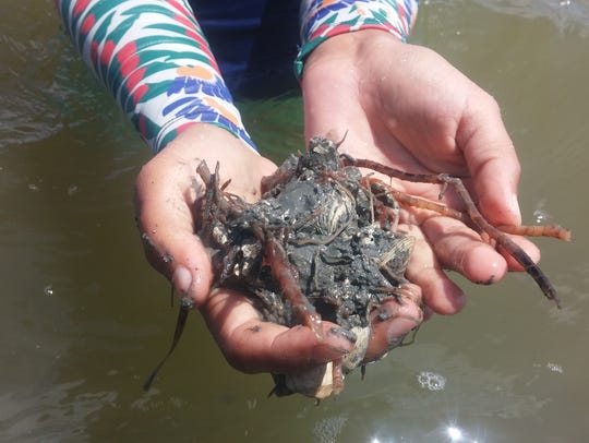 About half the seagrass between Copano Bay and the