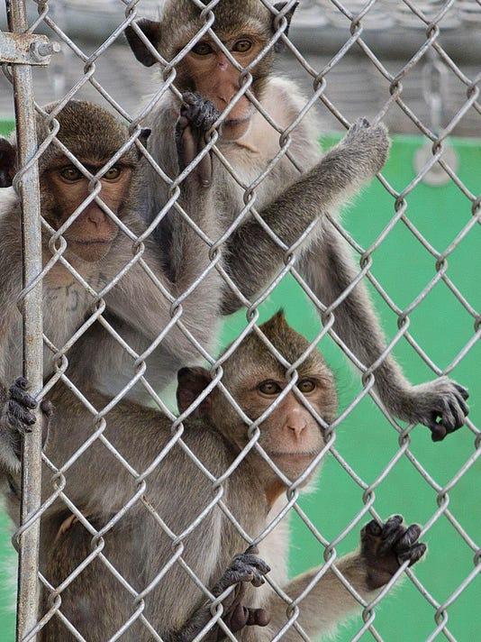 -monkey9.jpg_20150513.jpg