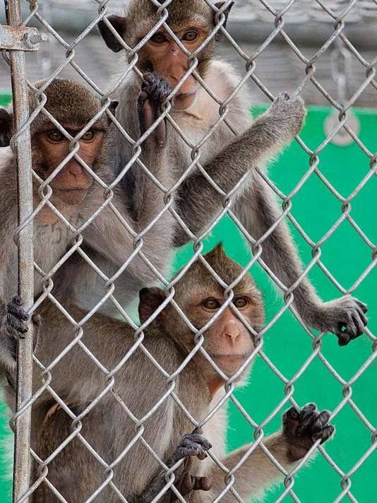 Monkeys at Primate Products